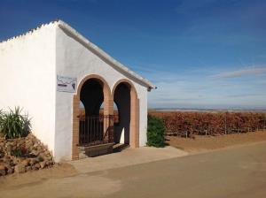 Visita y cata en el Viñedo en verano. Visitas a Bodegas Viñedos de Alfaro