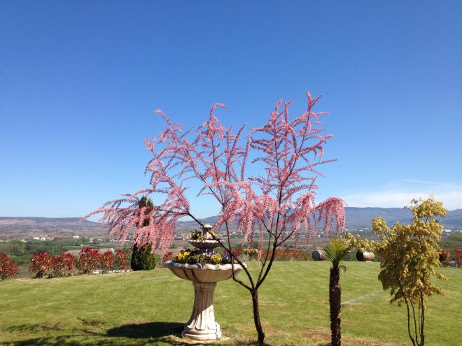 Vive la pasión de la primavera en Bodegas Ayagar