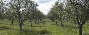"Visita a la ""Almazara Ecológica de La Rioja"""