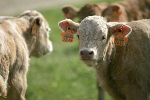 Feria de ganadería y artesanía agroalimentaria de Ojacastro