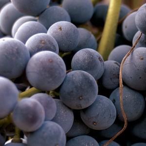 Ein Tag des Weintourismus