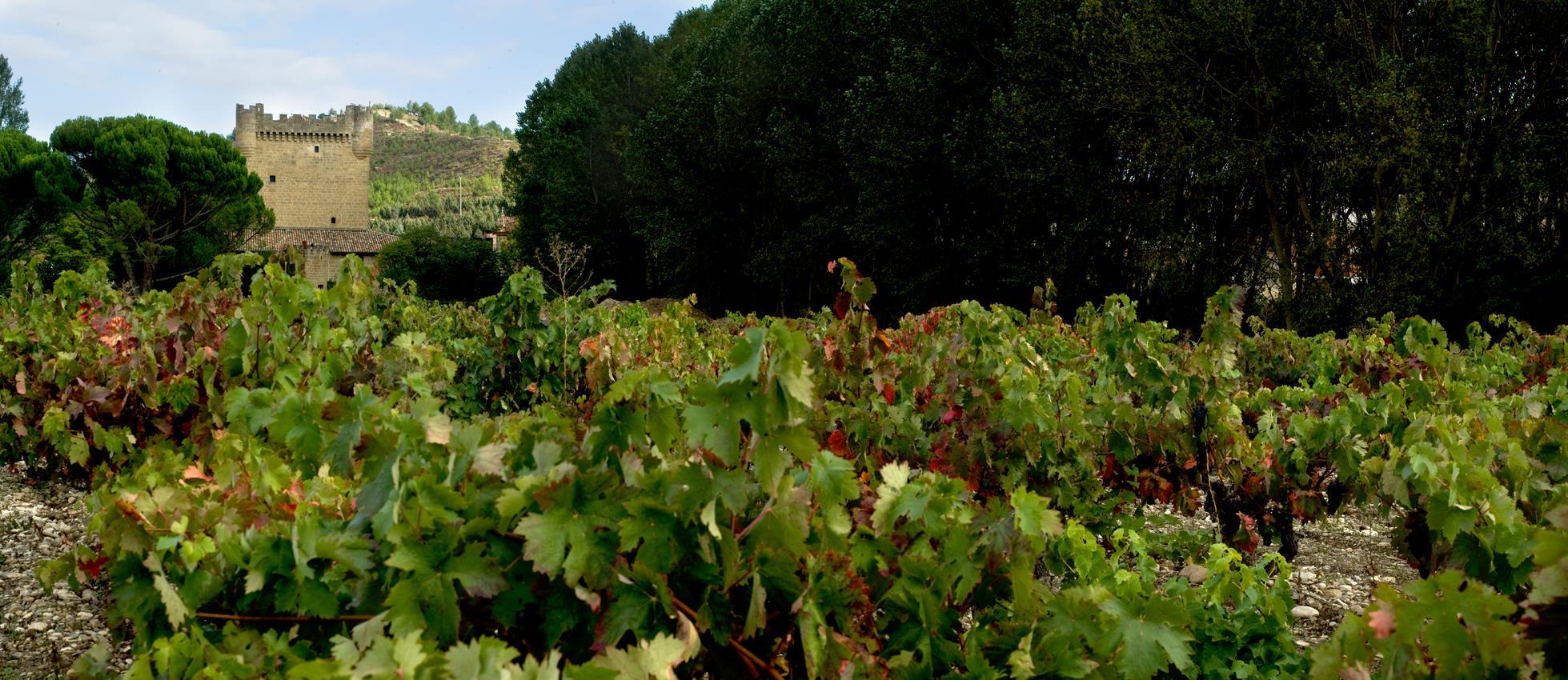Bodegas castillo de cuzcurrita winery la rioja turismo for Bodegas de jardin