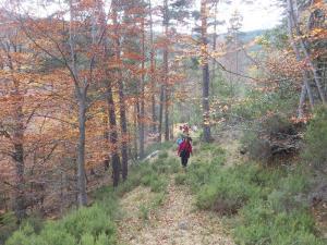 El bosque multicolor. Los matices del otoño.