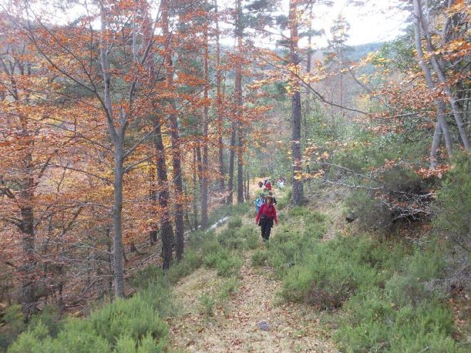 Marcha guiada de otoño: El Bosque Multicolor
