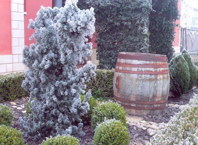 Bodega Viñas Nuevas