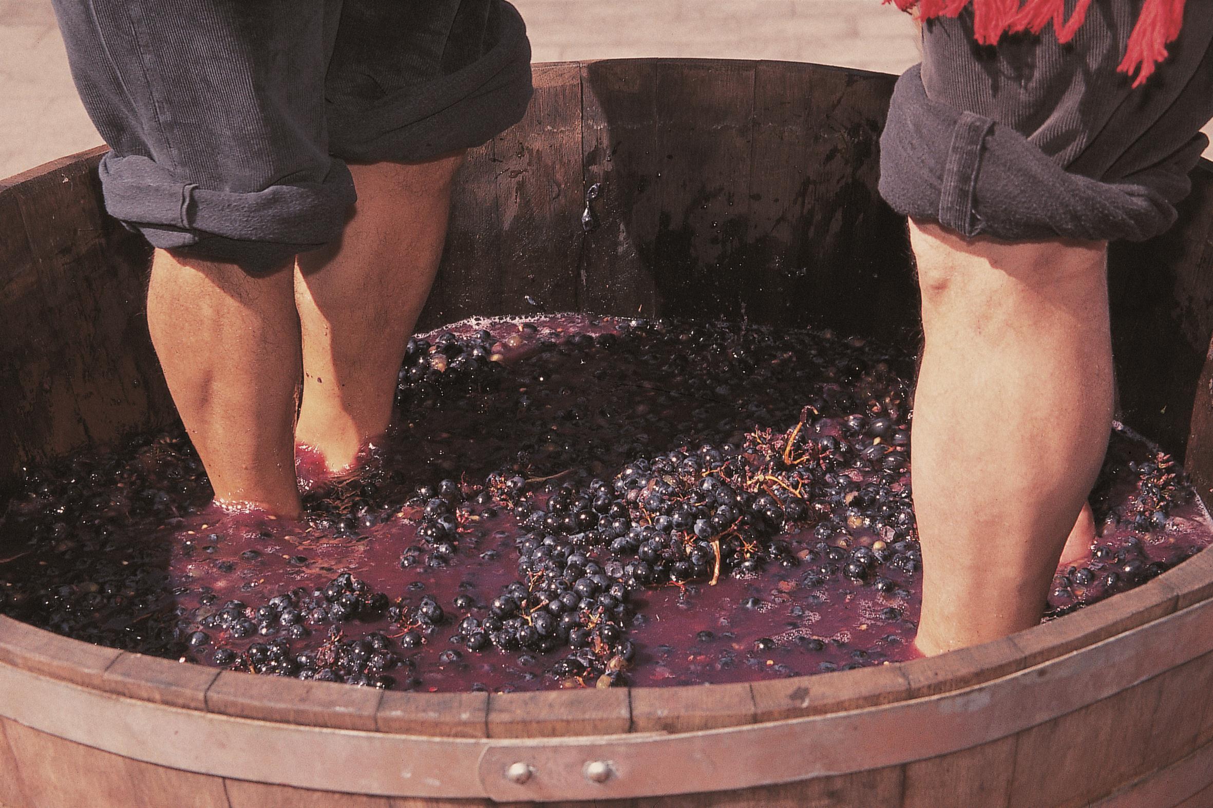 Madeira, Fiesta de la Vendimia y del Vino - Vinos y