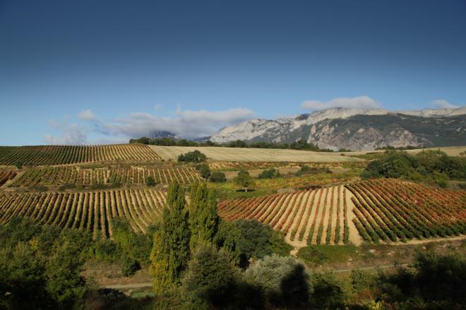 Bodegas Tobía: Vinos y viñedos de altura