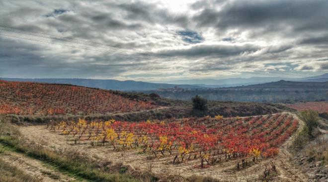 Historia del Rioja visitando bodegas