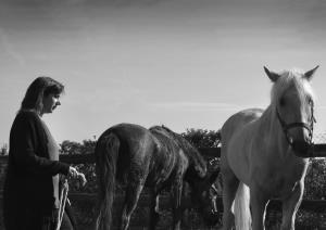 Un ALTO en el Camino... Una sesión de liderazgo con caballos