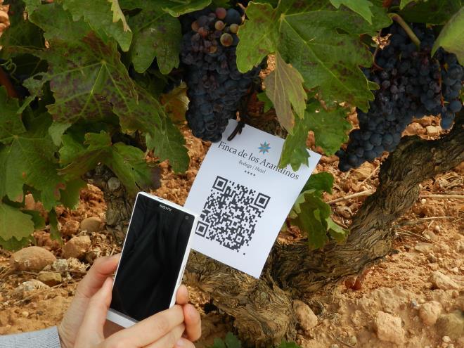 Visita virtual al viñedo con picnic
