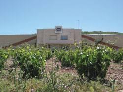 Bodegas Sáenz de Santamaría