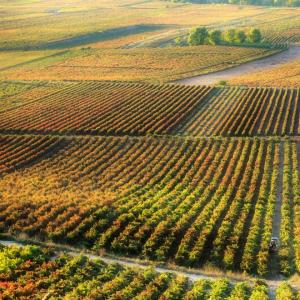 Ruta del vino de Rioja Alta