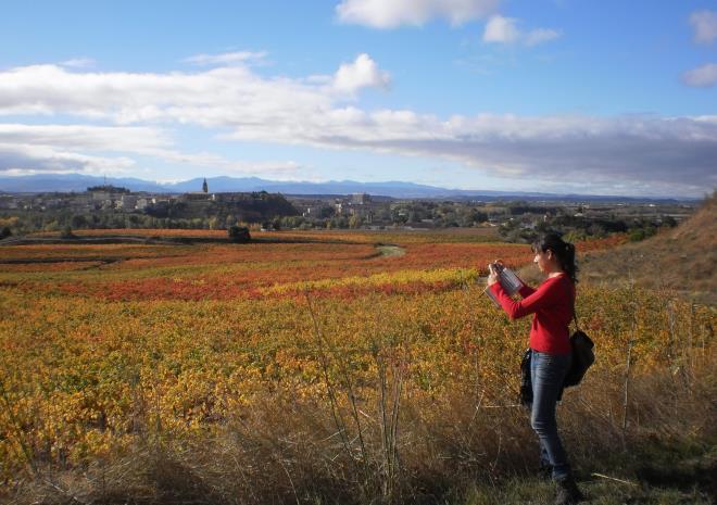 Paseo por el viñedo y su historia