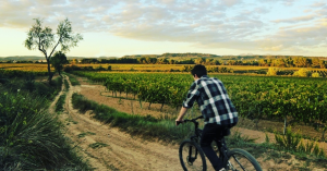 Bike & Wine con picnic en jardín