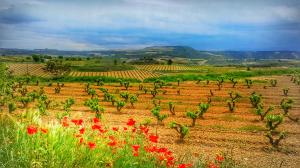 Nos Vamos en Bus a Descubrir La Rioja