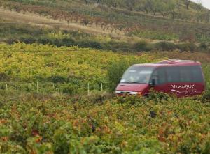 Rutas turísticas en bus: Vinobús, Celtibús