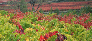 Ruta del vino de Rioja Oriental