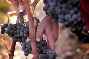 Cata de uvas en el Jardín de Baco