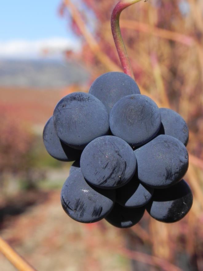 La viña se tiñe de rojo