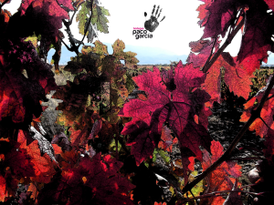 Los colores del otoño entre viñedos