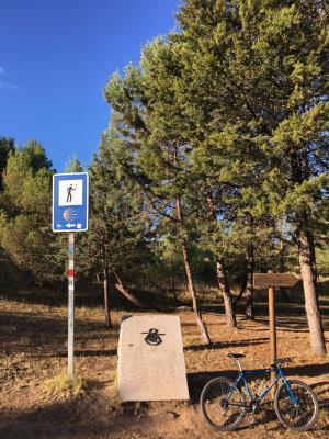 Paseo en btt Entre Viñedos