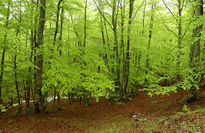 Programa de actividades del Parque Natural Sierra Cebollera