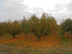 XXXII Jornadas de Fruticultura en Alfaro