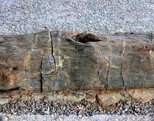 Centro de Interpretación Paleontológica de La Rioja