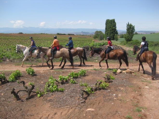Paseos a caballo entre viñedos