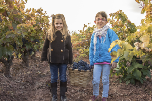 Grape harvest with family or friends