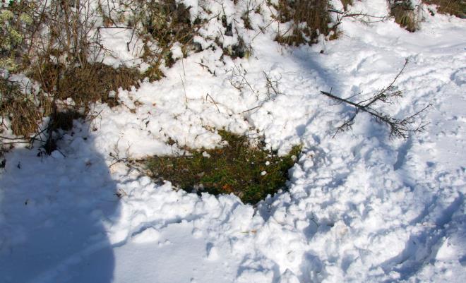 La nieve es una chivata