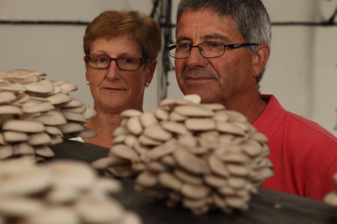 Otoño de setas cultivadas en La Rioja