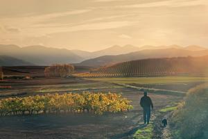 Experiencias de otoño en La Rioja