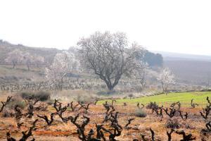 Ruta en BTT: La Rioja Alta