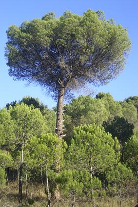 Sendero del Monte de Vico (Arnedo)