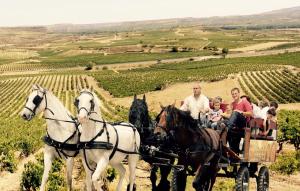 Viaja a La Rioja del siglo XVI, entre calados centenarios y carro de caballos por los viñedos de San Asensio