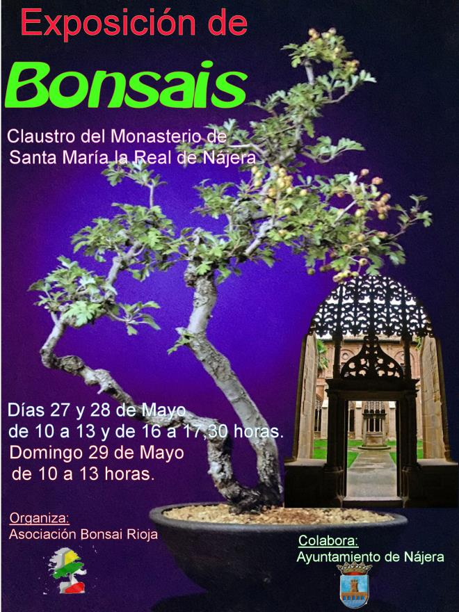 Exposición de bonsais en el Claustro de Santa Maria la Real de Najera