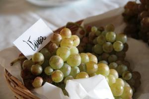 Experiencia Bohedal: Cata de uvas y vendimia en familia