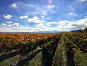 Invierno en el viñedo