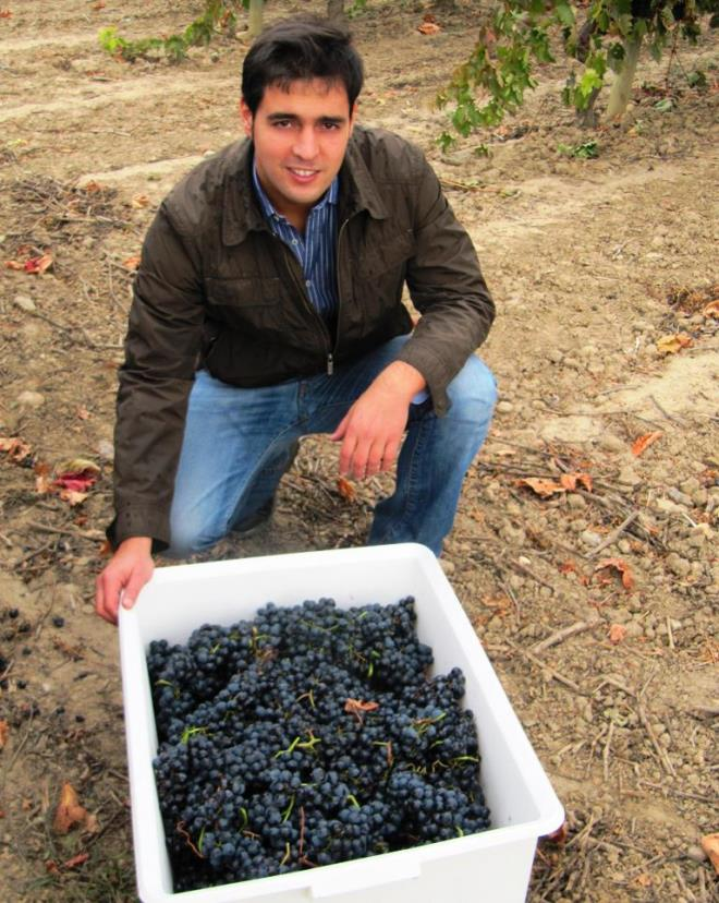 Otoño, maduración y vendimia en Bodegas Urbina