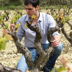 De la floración al envero en Bodegas Urbina