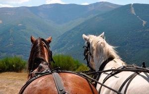 Disfruta La Rioja Alta a pie o en carro de caballos