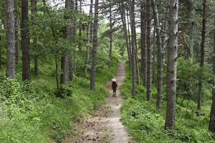 Camino peatonal Yuso-Suso Labardera