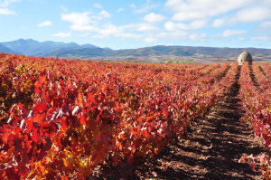 """Be a witness of the vineyard's color changing with the experience """"Ruta del Guardaviñas"""""""