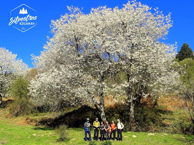 Rutas botánicas por el entorno de Ezcaray