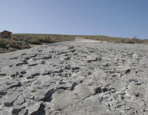 Yacimientos de icnitas de  Igea - La era del Peladillo