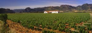 Visita al viñedo + visita a Bodegas Muga