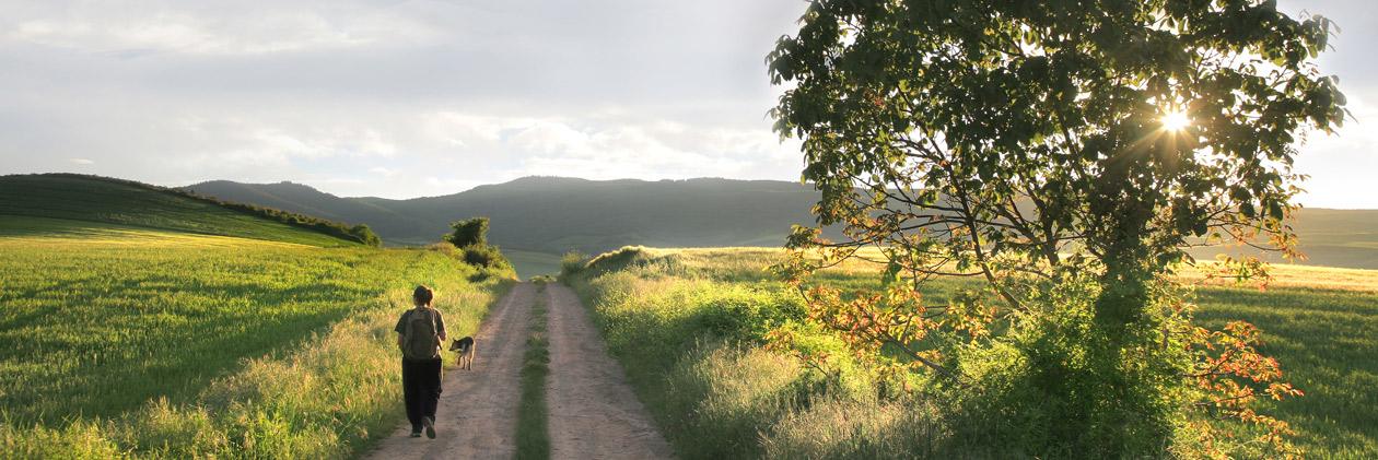 Routen durch die Natur